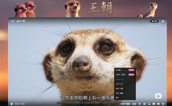 B 站上线首部 4K HDR 画质大片:BBC 纪录片《王朝狐獴》