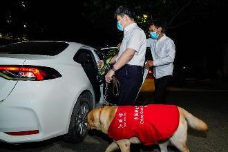北京等地上线导盲犬用户打车服务 司机每单可获10元奖励